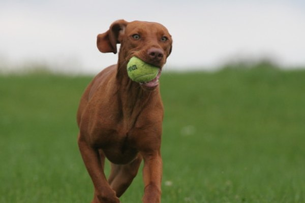 Fetch can be a fun bonding experience for dogs and their owners.