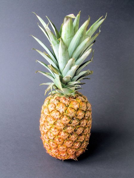 Pineapple Plant Information Garden Guides