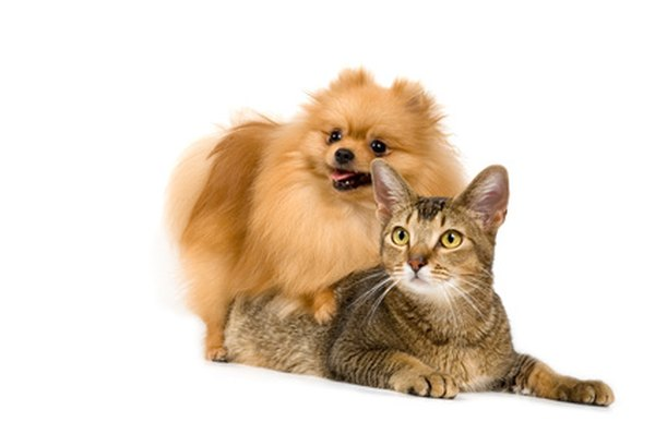 It's natural for dogs to eat the feces of other animals, including those of cats.