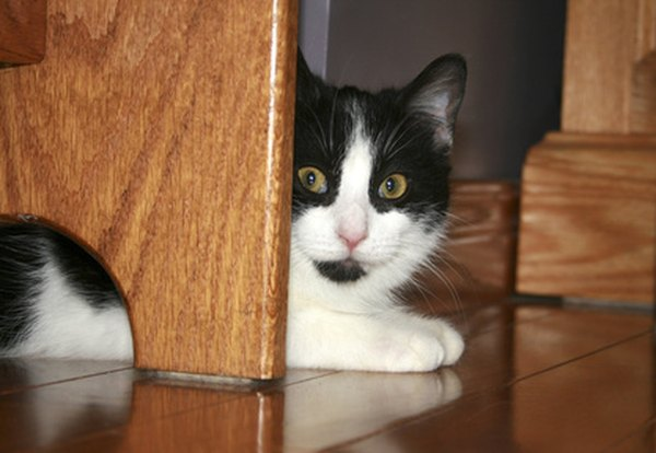Cats Feel Less Vulnerable In The E Under Bed