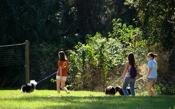 Walking dogs is just one of many tasks a pet-sitting service may carry out in the absence of the dog owner.