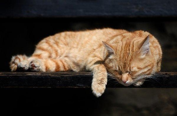 cat exam training institute