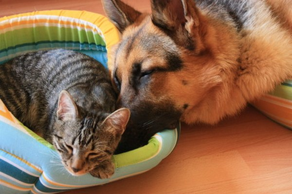 Natural ways to repel fleas on cats