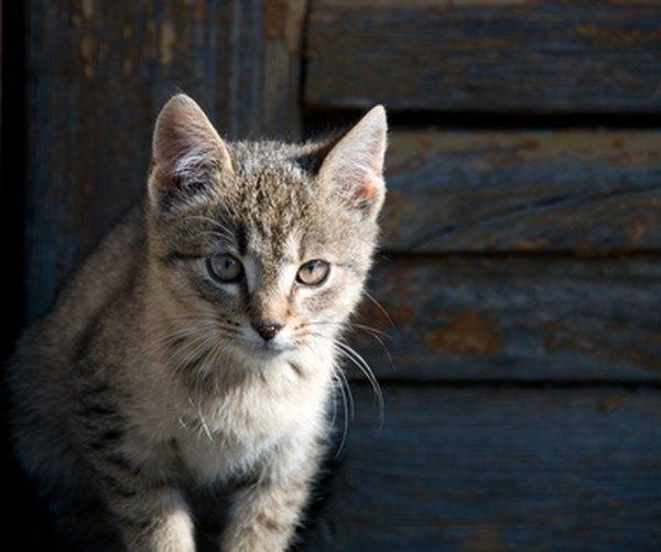 getting rid of fleas on kittens under 6 weeks
