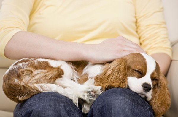 Petting your dog lowers blood pressure and relieves stress.