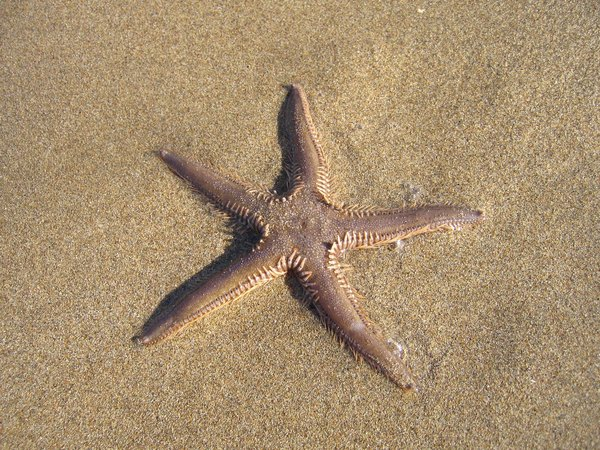 Starfish can regenerate.