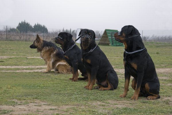 """Me and my friends at K-9 training are watching you."""