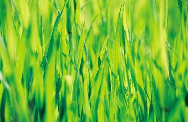 Soil Doctor Pelletized Lime Spreader Settings Home Guides