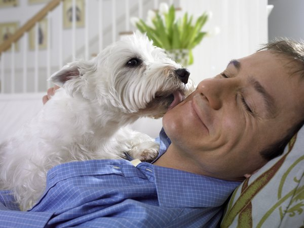 Your Scottie dog will thank you for all your hard work grooming her.