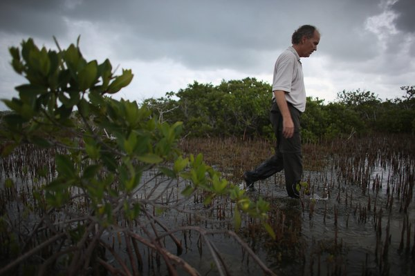 An ecologist researching ecosystems in the field.