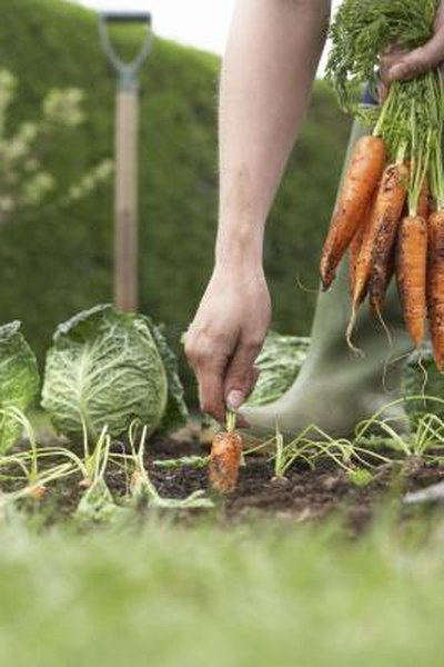 How Many Square Meters for a Vegetable Garden to Supply a Family for  X Vegetable Garden Designs Html on
