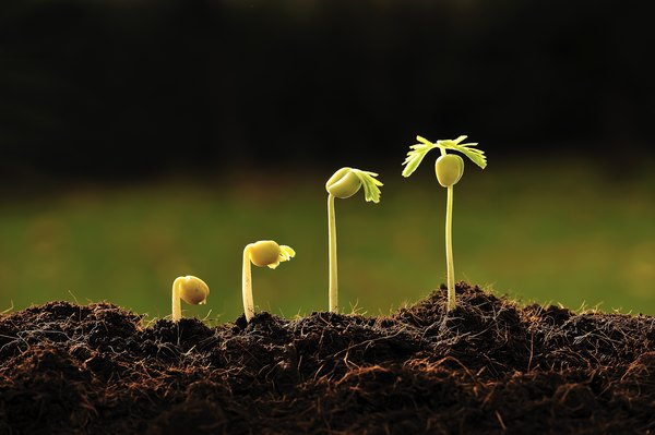 Different stages of a seed sprouting