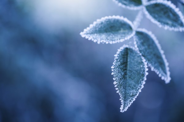 Deposition can occur when water vapor solidifies on cold days.