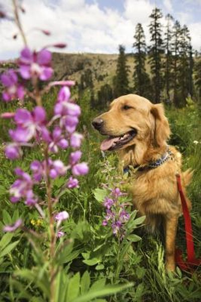 Flowers Poisonous To Dogs Pets