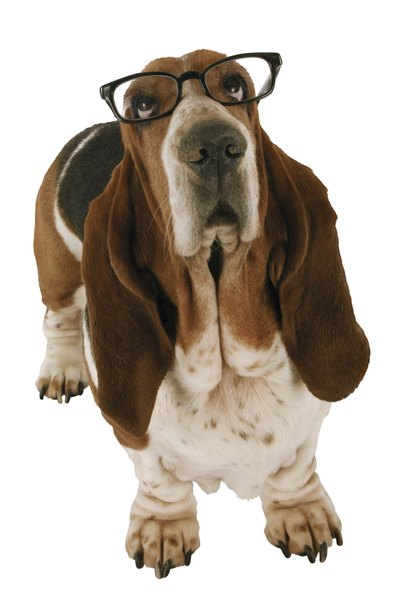 You have a few ways to tell if your dog is having vision problems.