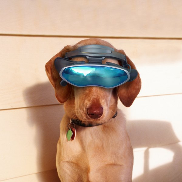 As an owner, you need to be aware of the problems that can occur with your dog's vision.