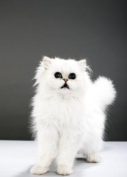 Why Do Cats Tails Puff Up Pets