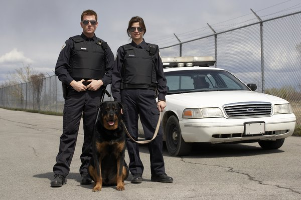 Rottweilers often work alongside security professionals.