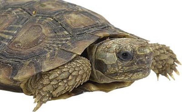 What Does it Mean When a Turtle Sheds? | Animals - mom me