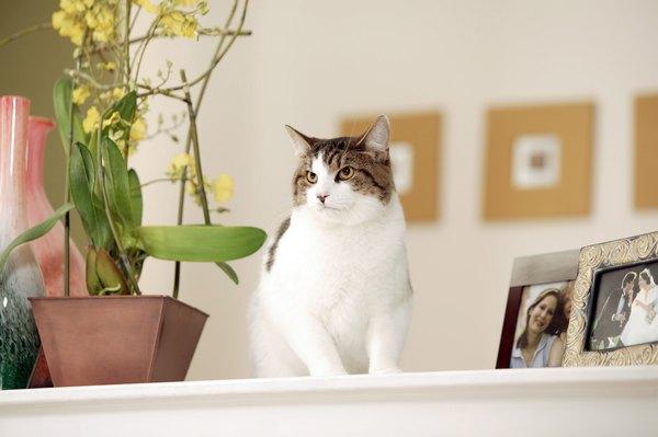 male cat peeing around house