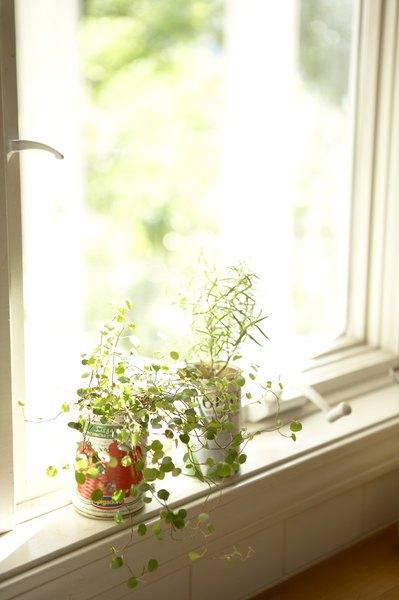 Utilize latas vazias como vasos de plantas