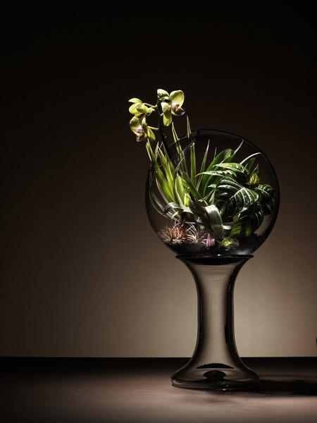 Creating a terrarium provides a way to observe a mini ecosystem.