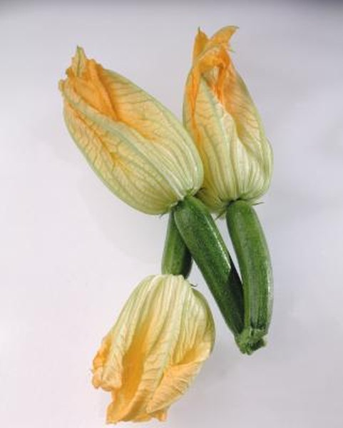 What Do Yellow Flowers on a Zucchini Plant Mean?