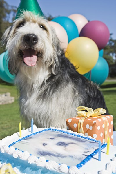 You can celebrate your dog's special day with a homemade treat and no baking.