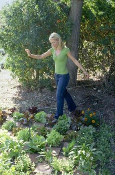 Homemade Recipe For Vegetable Garden Fertilizer Home Guides Sf Gate