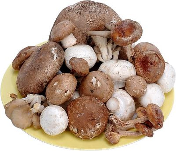 Can You Grow Different Strains of Mushrooms in the Same