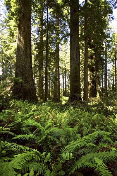The biomass of forests store carbon that would otherwise contribute to global warming.