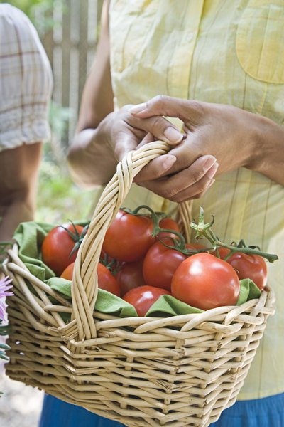 how to grow tomatoes in 5 gallon buckets home guides sf gate
