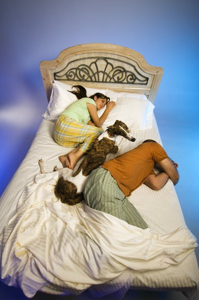 Never allow your dog in your bed if you don't want it to sleep in your room.