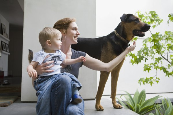 Your dog needs time to adjust to your new baby.