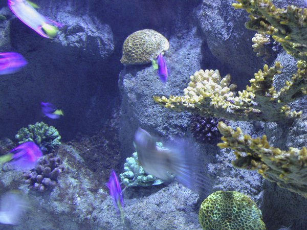 When Done Well A False Back Can Make Your Aquarium Look Like Tropical Reef