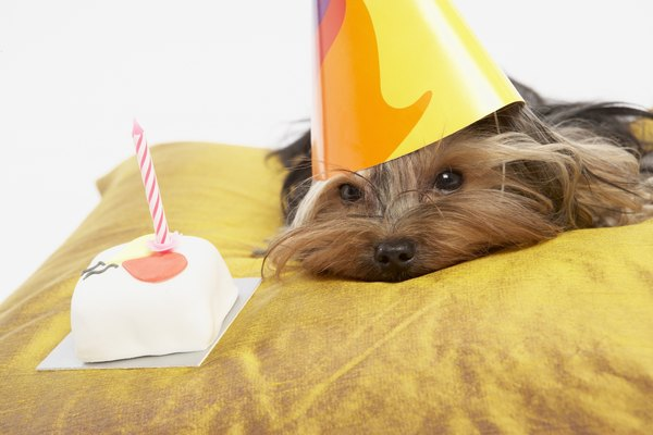 On your puppy's birthday, surprise him with a delicious dog-friendly cake.