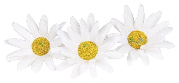 """Chrysanthemun Leaucanthemum o """"Margarita""""."""