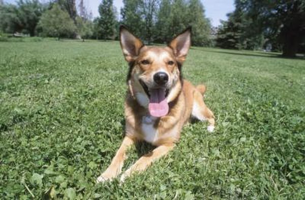 Lawn Fertilizer Effects on Dogs | Home Guides | SF Gate