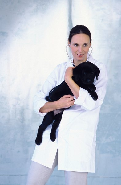 Only a veterinarian can perform a neuter surgery, or diagnose complications post-surgery.