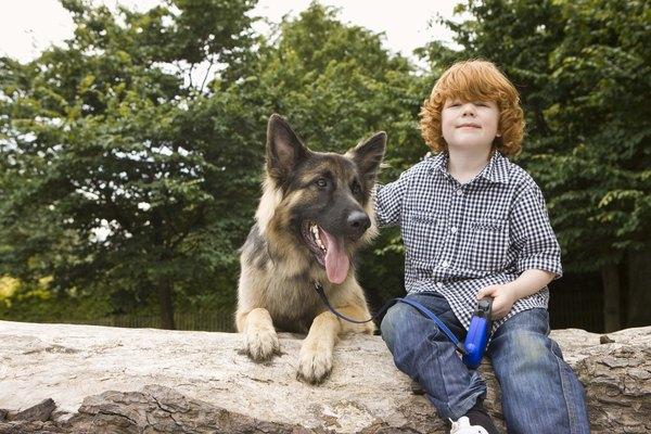 Los pastores alemanes pueden desarrollar lazos fuertes con los niños.