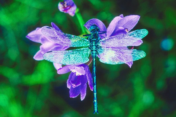 Dragonflies are visually appealing.