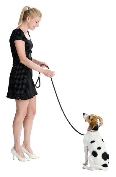 Reward your dog as she learns verbal commands.