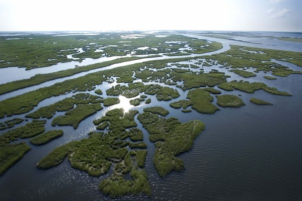 Swamp in Louisiana.
