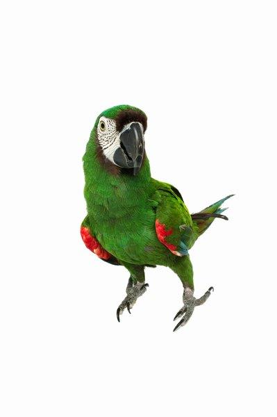 essay on my favourite bird parrot पक्षिणः ( sanskrit essay on birds )  our app has full page birds essay download app here navigate to homenaturebirds in our apps  please give me an essay on owl and parrot reply delete priya june 2, 2014 at 5:29 am i want 10 lines on mm vidhalaya  pleaseeeeeeeeeeeeeeeeee.