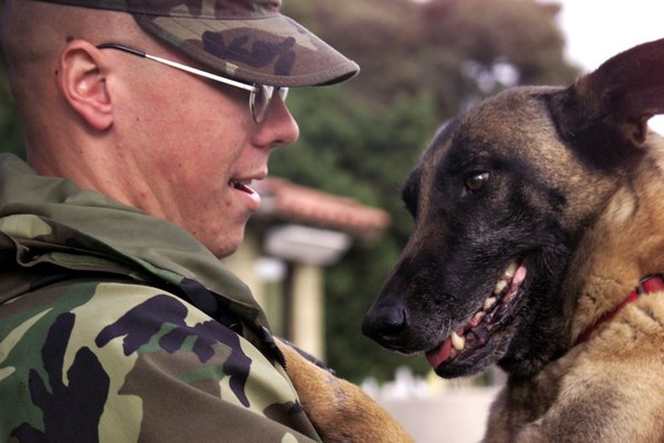 Do dogs recognize their masters after a long absence pets the bond between soldier and dog holds strong despite long deployments m4hsunfo