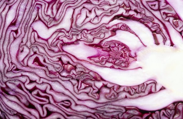 A chemical in red cabbage can be used to make pH test strips.