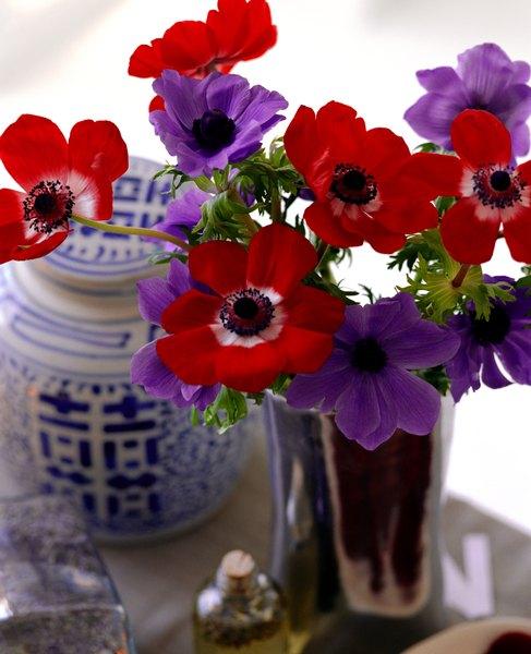 Flores cortadas devem ficar em cantos arejados e longe da luz direta do sol