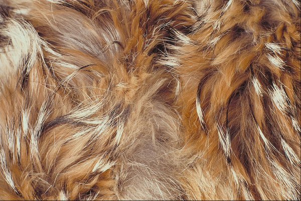 Dogs with mange suffer hair loss and red, itchy skin.