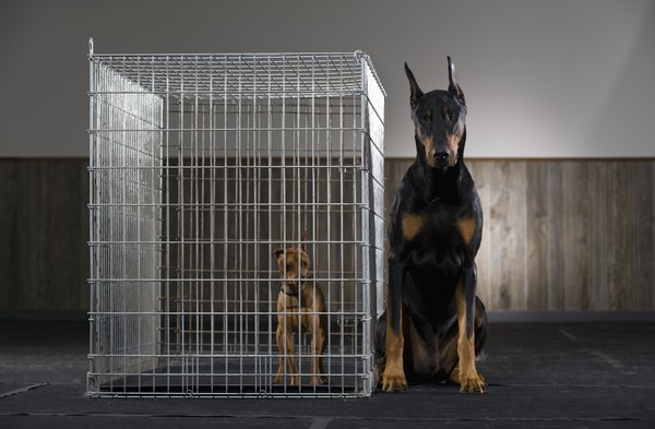 Cage confinement is often necessary to keep your dog's activity to a minimum.