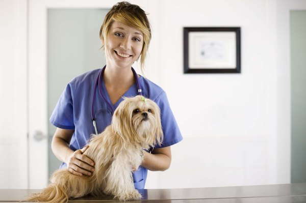 Vets and vet techs check your dog's lymph nodes to make sure they are normal-sized.